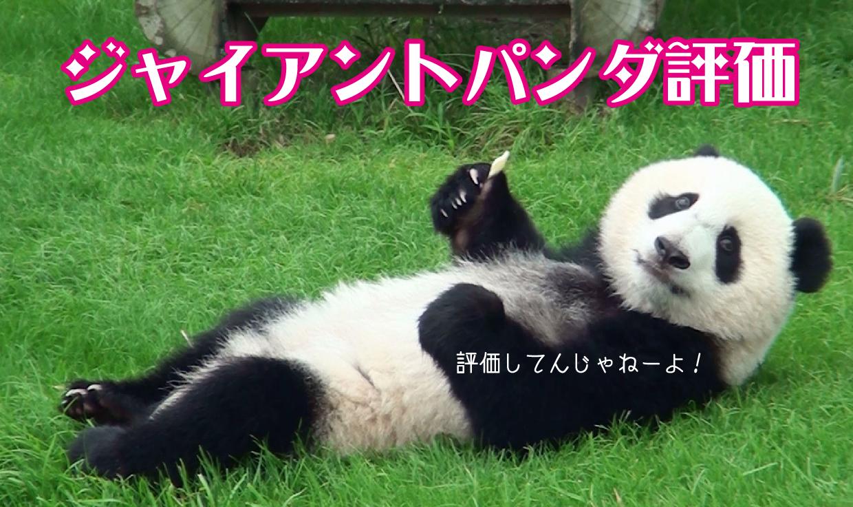 ジャイアントパンダの画像 p1_5